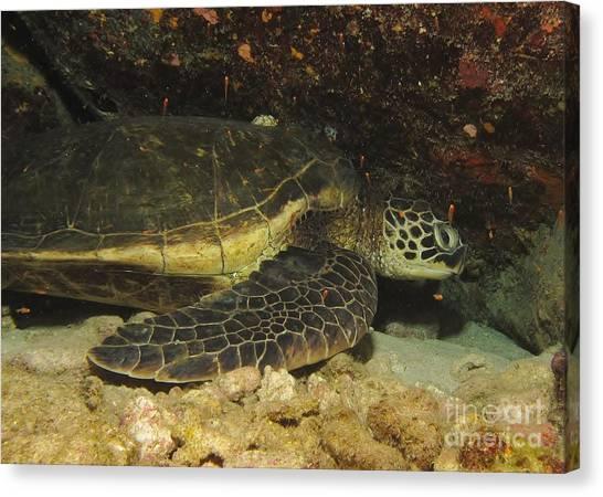Underwater Caves Canvas Print - Sleeping Sea Turtle by William Miller