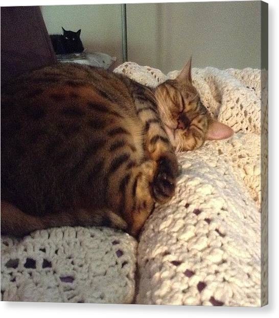 Bengals Canvas Print - Sleepy Kitty #cute #awesome #bengalcat by Reannyn Weiler