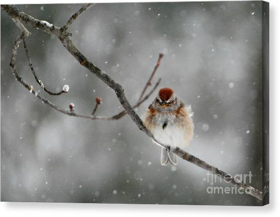 Sleepy Little Sparrow Canvas Print