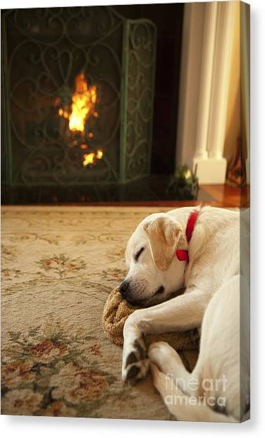 Yellow Lab Canvas Print - Sleepy Puppy by Diane Diederich