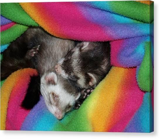Sleepy Weezles Canvas Print