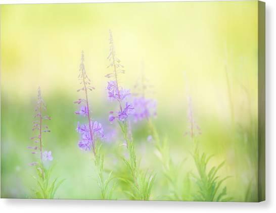 Andy Bloom Canvas Print - Slender Fireweed by Andy-Kim Moeller