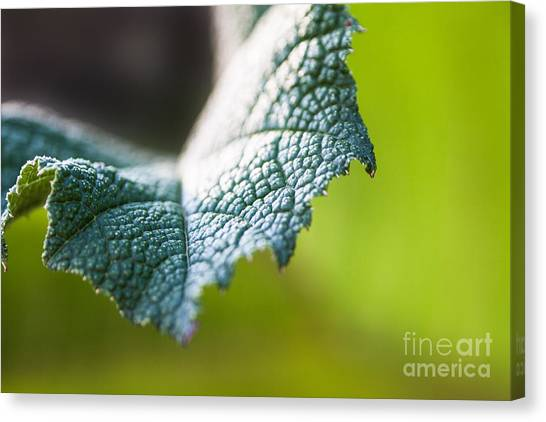 Slice Of Leaf Canvas Print