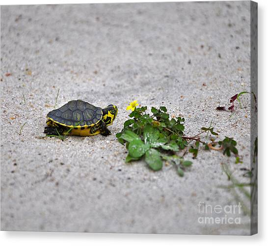 Slider And Sorrel In Sand Canvas Print