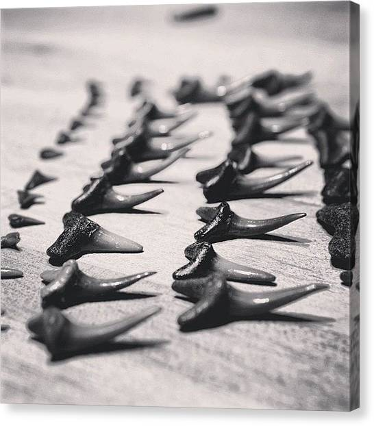 Hammerhead Sharks Canvas Print - Slinging Sharks Teeth On The Interwebs by Christopher Helling