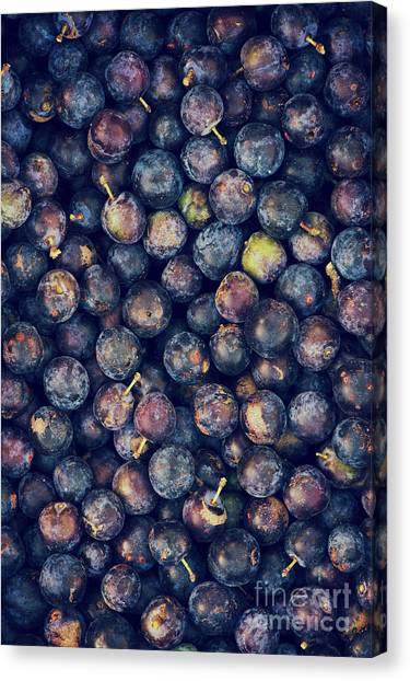 Fruit Canvas Print - Sloes by Tim Gainey