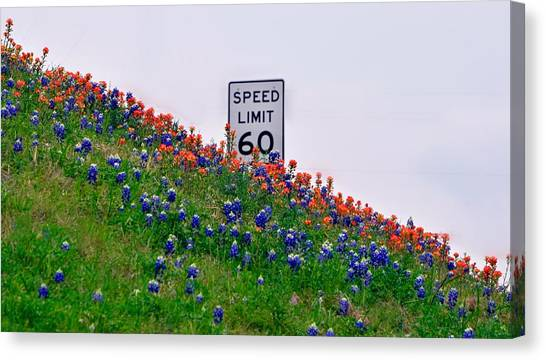 Slow Down And Smell The Bluebonnets Canvas Print
