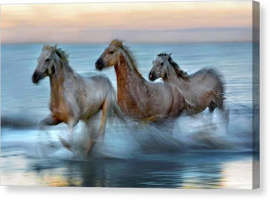 Slow Motion Horses Canvas Print by Xavier Ortega