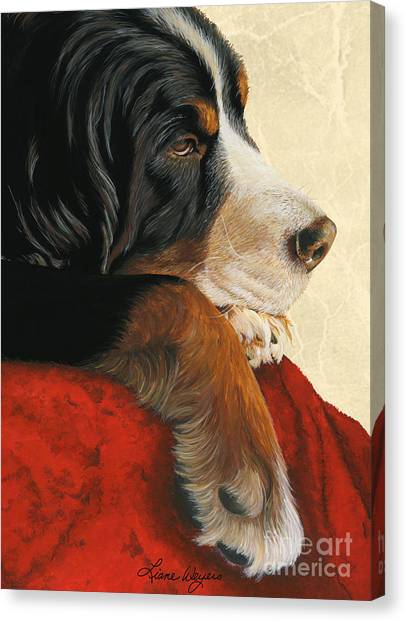 Bernese Mountain Dogs Canvas Print - Slumber by Liane Weyers