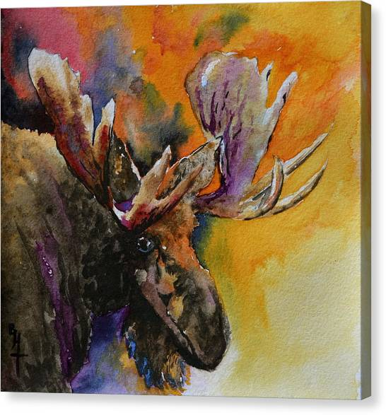 Sly Moose Canvas Print