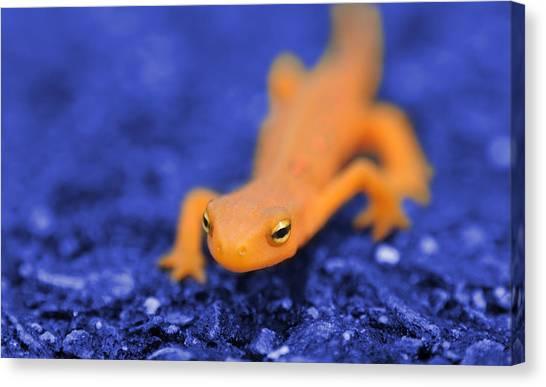 Newts Canvas Print - Sly Salamander by Luke Moore