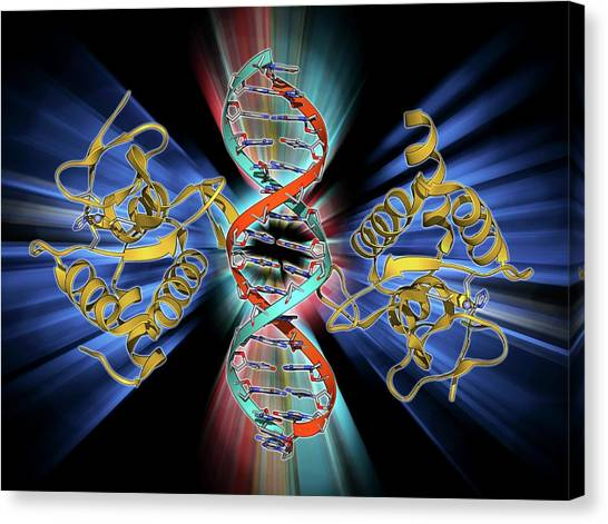 Smad4 Protein Domain Bound To Dna Canvas Print by Laguna Design