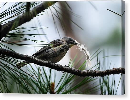 Small Bird Canvas Print