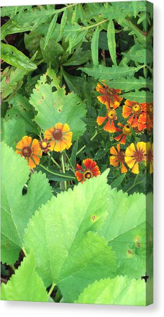 Small Flowers Canvas Print by Cynthia Harvey