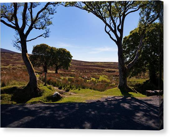 Moorland Canvas Print - Small Group Of Trees, East Kippure by Panoramic Images