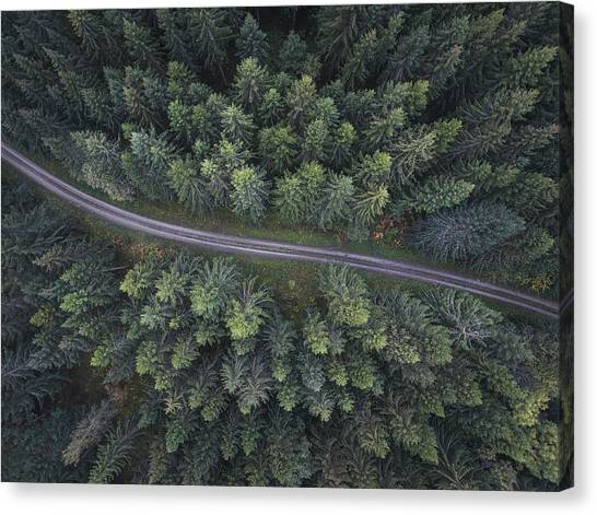 Pine Trees Canvas Print - Small Road Through The Forest by Christian Lindsten