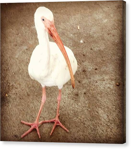 Storks Canvas Print - Small Stork #disneyworld #florida by Lisa Thomas