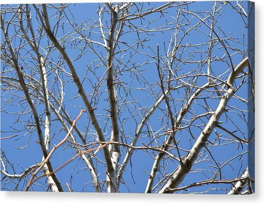 Smallest Branches Canvas Print by Kiros Berhane