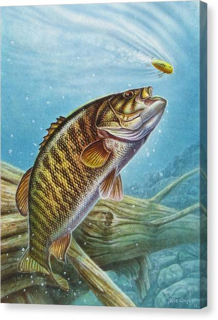Smallmouth Bass Canvas Print - Smallmouth Bass by JQ Licensing