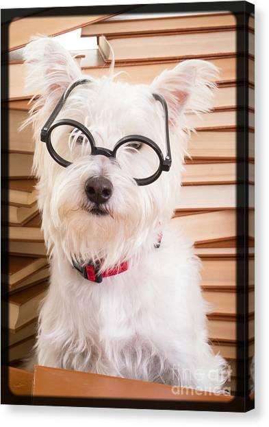 Professors Canvas Print - Smart Doggie by Edward Fielding