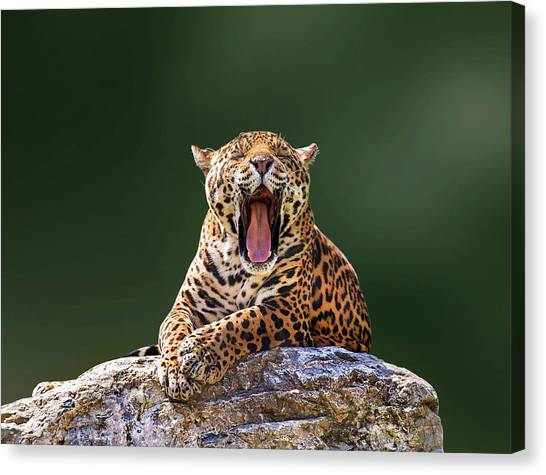 Smile Canvas Print by Photo By Ivan Vukelic