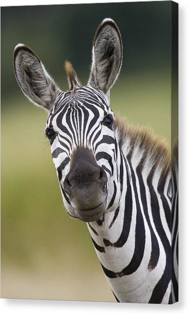 Canvas Print featuring the photograph Smiling Burchells Zebra by Suzi Eszterhas
