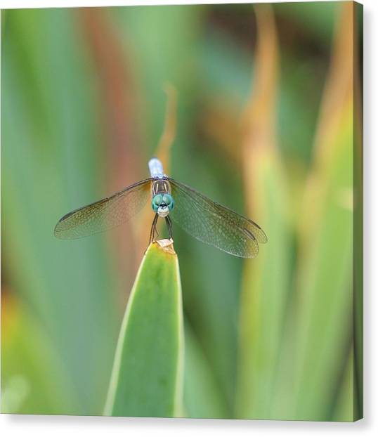 Smiling Dragonfly Canvas Print