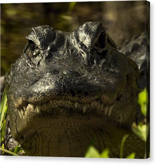 Smiling Gator Canvas Print