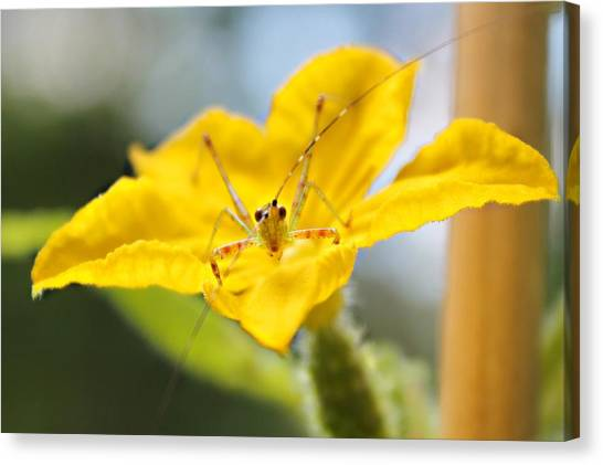 Canvas Print featuring the photograph Smiling Katydid by Candice Trimble