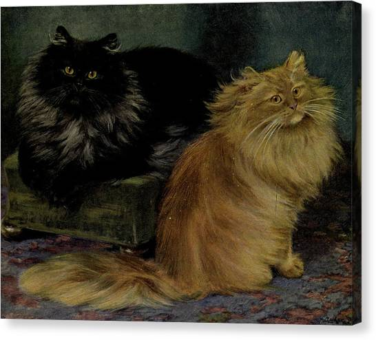 Manx Cats Canvas Print - Smoke And Orange Persians by Philip Ralley