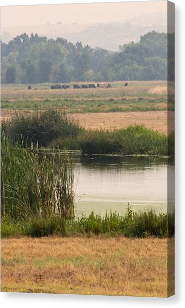 Smokey Pasture And Pond Canvas Print by Sarah Mueller