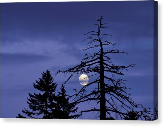 Smoky Moon Canvas Print