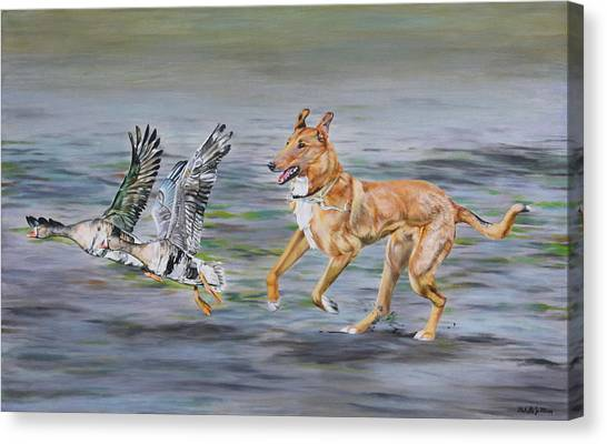 Smooth Collie Trying To Herd Geese Canvas Print