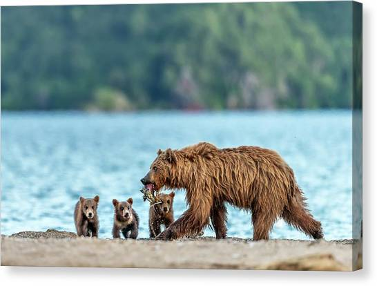 Brown Bears Canvas Print - Snack by Giuseppe D\\\'amico