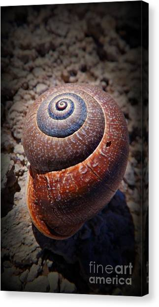 Snail Beauty Canvas Print