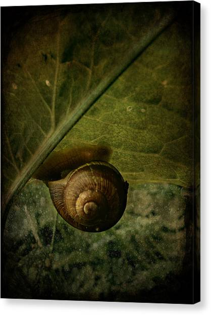 Snail Camp Canvas Print