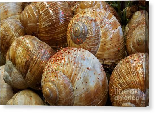 Snail Houses Canvas Print by Jolanta Meskauskiene