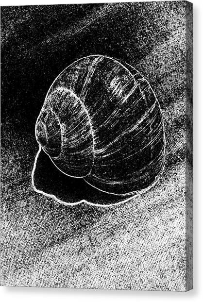 Snail Shell Black And White Art No.11 Canvas Print by Drinka Mercep