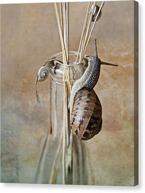 Bug Canvas Print - Snails by Nailia Schwarz