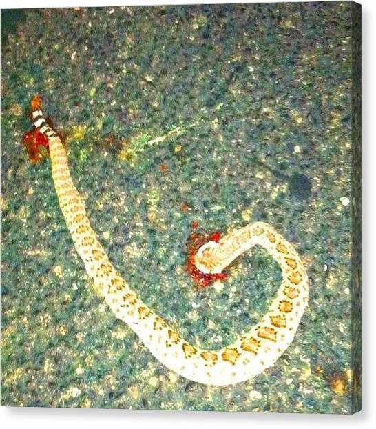 Rattlesnakes Canvas Print - #snake #diamondback #died #roadrage by Nate Greenberg