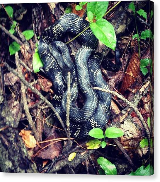 Indiana Canvas Print - #snake Found In Our Hike At #ferdinand by Melissa Wyatt