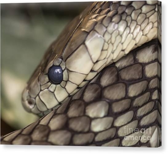 Snake Canvas Print - Snake by Lucid Mood