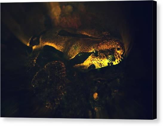Snake Canvas Print by Valarie Davis