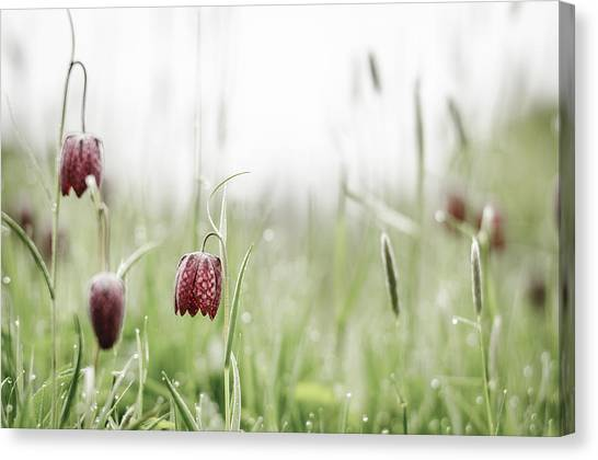 Andy Bloom Canvas Print - Snake's Head Flower No. 3 by Andy-Kim Moeller