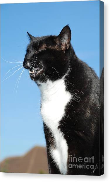 Sneezing Cat Canvas Print