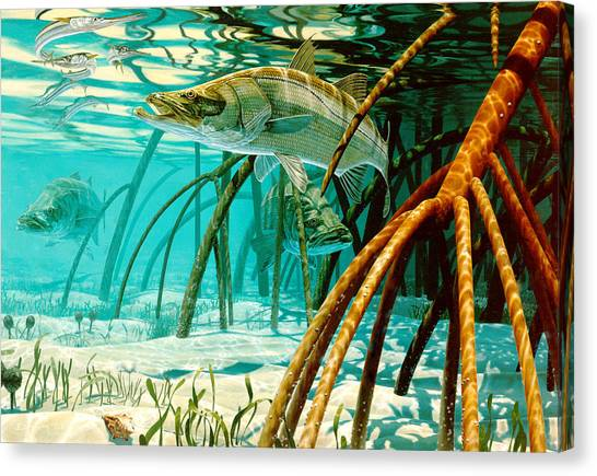 Ocean Life Canvas Print - Snook In The Mangroves by Don  Ray