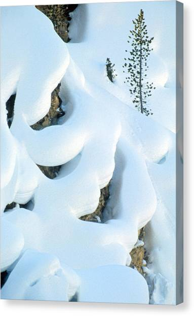 Snow And Tree Canvas Print