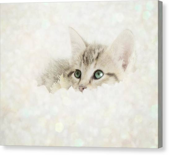 Baby Canvas Print - Snow Baby by Amy Tyler
