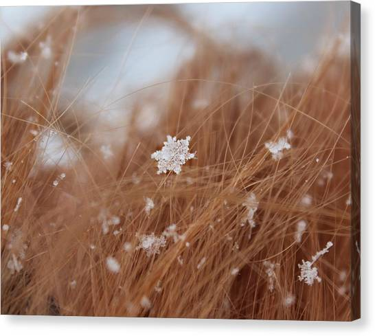 Canvas Print featuring the photograph Snow Beauty by Candice Trimble