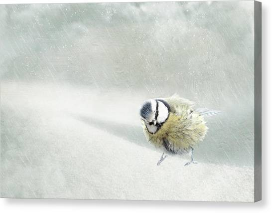 Search Canvas Print - Snow Bird by Heike Hultsch